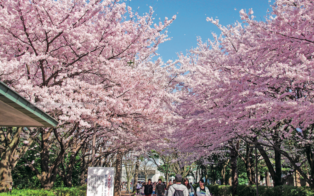 Intégrer un établissement du supérieur au Japon