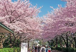 SNG Préparer son voyage au Japon